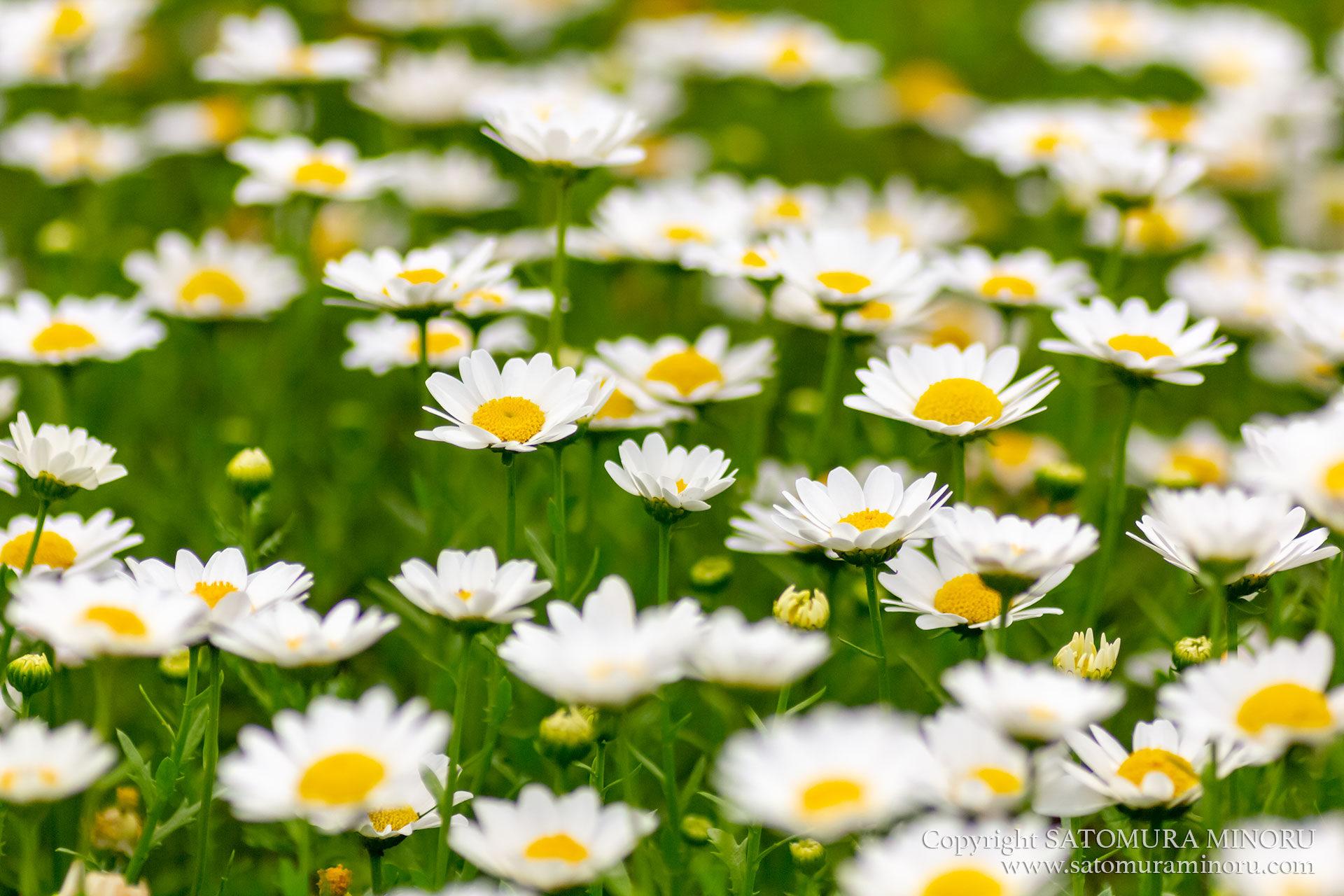 公園に咲いてた花